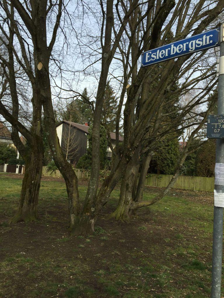 Esterbergstraße