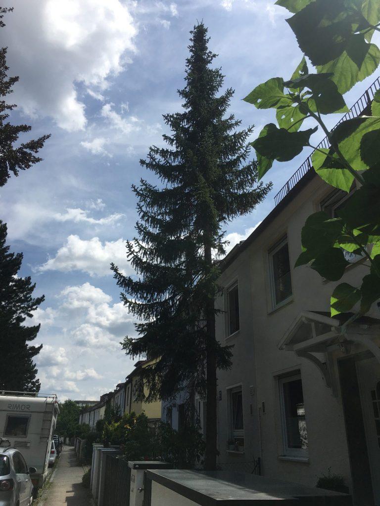Stethaimerstraße