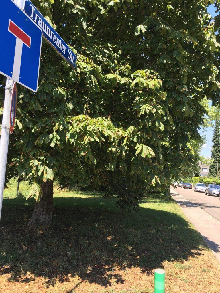 Traunreuter Straße