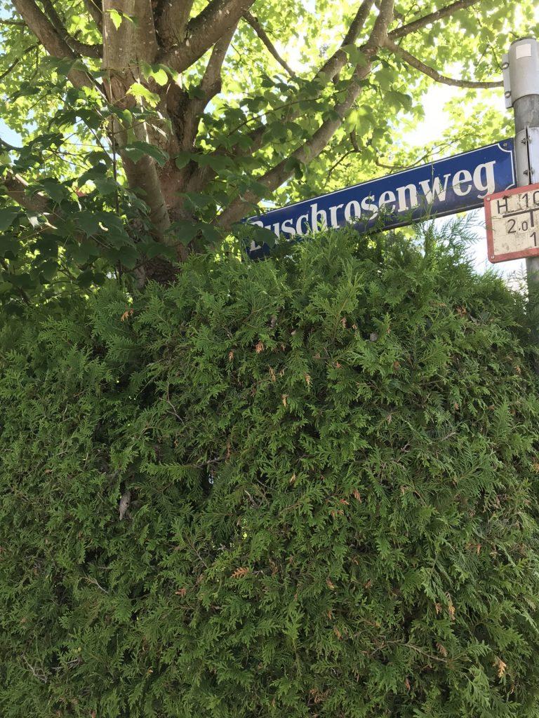 Buschrosenweg