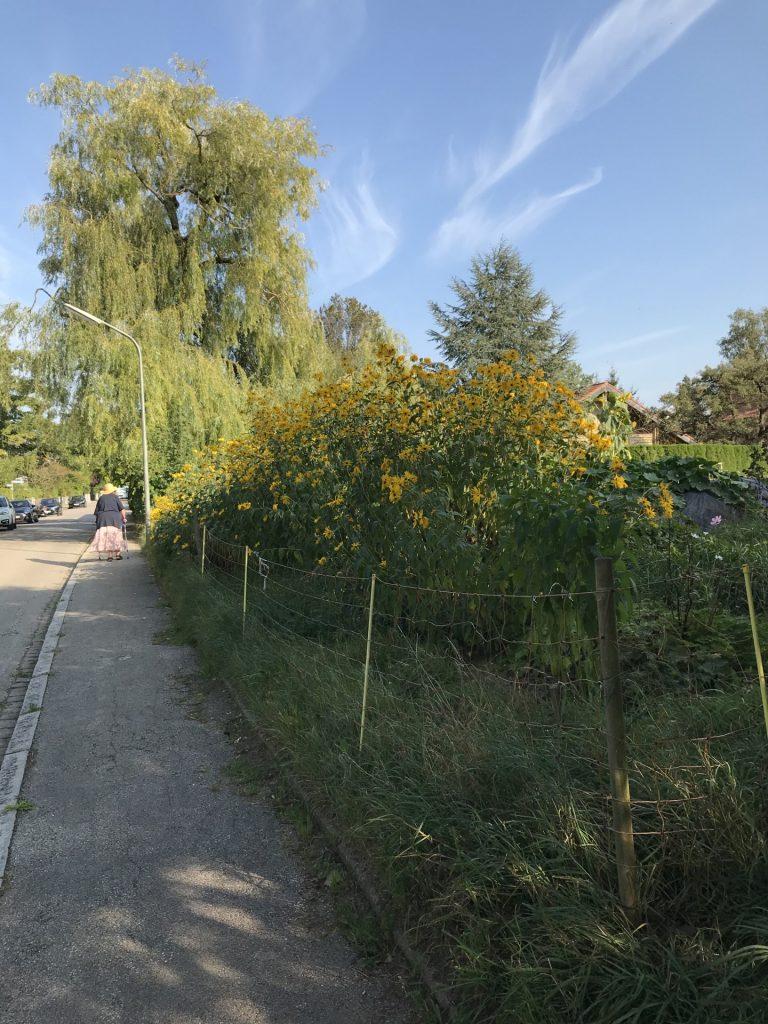 Heilmaierstraße